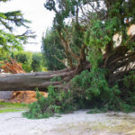 Do Trees Affect Your Homeowners Insurance?