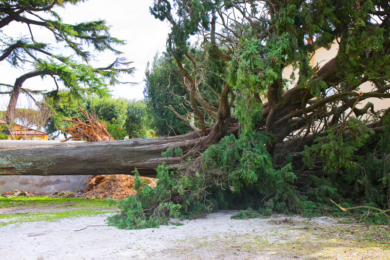 Trees and Homeowners Insurance
