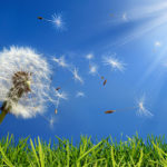 How to Survive the Spring Allergy Season with Natural Remedies