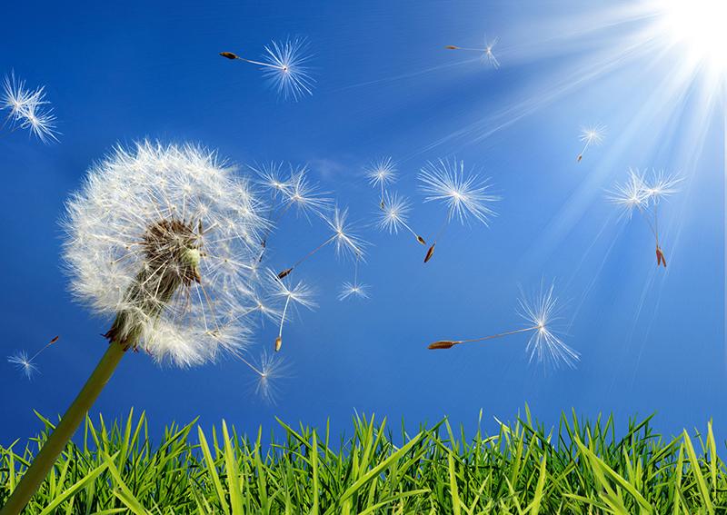 Survive the Spring Allergy Season